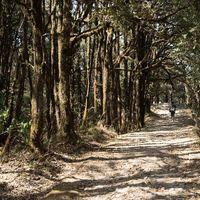Binsar Sanctuary 5/15 by Tripoto