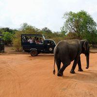 yala national park 4/4 by Tripoto