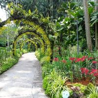 Singapore Botanic Gardens Cluny Road Singapore 2/3 by Tripoto