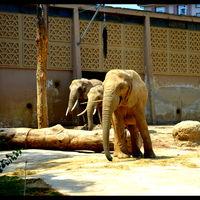 Basel Zoo 2/3 by Tripoto