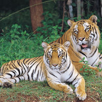 Bannerghatta National Park 4/29 by Tripoto