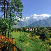 Seclude Palampur 5/5 by Tripoto