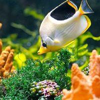 Government Aquarium 4/4 by Tripoto