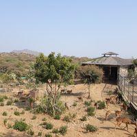 Sajjangarh Wildlife Sanctuary 5/12 by Tripoto