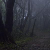 Matheran Eco-sensitive Hill Station 5/29 by Tripoto