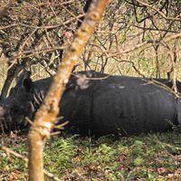 Pobitora Wildlife Sanctuary 2/12 by Tripoto