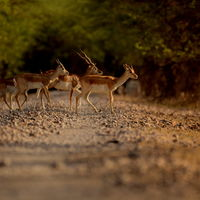 Blackbuck National Park 5/8 by Tripoto