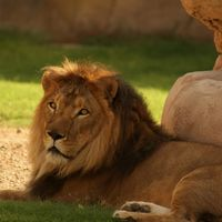Al Ain Zoo & Aquarium - Al Ain - United Arab Emirates 2/3 by Tripoto