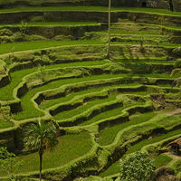 Tegalalang Rice Terrace 3/3 by Tripoto