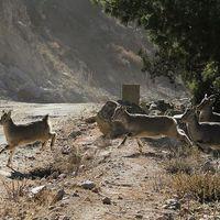 Gangotri National Park 5/7 by Tripoto