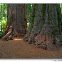 Calaveras Big Trees State Park 2/2 by Tripoto