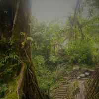 Jingkieng Nongriat Double Decker Living Root Bridge 5/7 by Tripoto