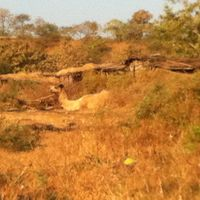 Gir National Park and Wildlife Sanctuary 4/23 by Tripoto