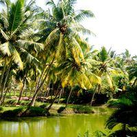 Kerala Backwater Houseboats 2/2 by Tripoto