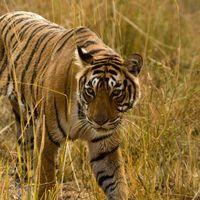 Raj Bagh  2/6 by Tripoto