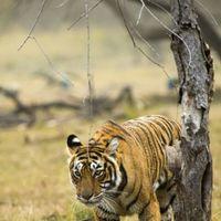 Raj Bagh  3/6 by Tripoto