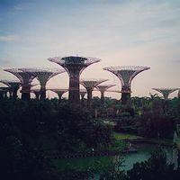 Singapore Botanic Gardens Cluny Road Singapore 3/3 by Tripoto