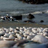 Harnai Beach 5/8 by Tripoto