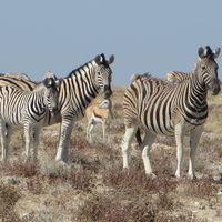 Etosha National Park 3/3 by Tripoto