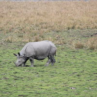 Pobitora Wildlife Sanctuary 5/12 by Tripoto