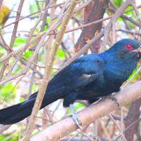 Okhla Bird Sanctuary 3/6 by Tripoto