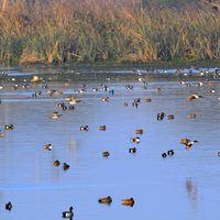 Okhla Bird Sanctuary 4/6 by Tripoto