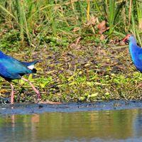 Okhla Bird Sanctuary 5/6 by Tripoto