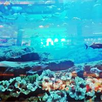Dubai Aquarium & Underwater Zoo - Dubai - United Arab Emirates 4/9 by Tripoto