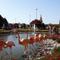 Dubai Miracle Garden - Arjan-Dubailand - Dubai - United Arab Emirates 4/19 by Tripoto