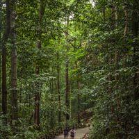 Bukit Timah Singapore 3/3 by Tripoto
