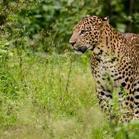 Mount Abu Wildlife Sanctuary 2/3 by Tripoto