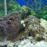 Samudrika Marine Museum 4/6 by Tripoto