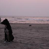 Morjim Beach 5/5 by Tripoto