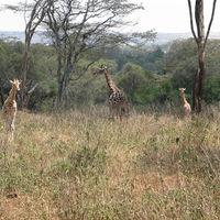 Nairobi National Park 3/13 by Tripoto