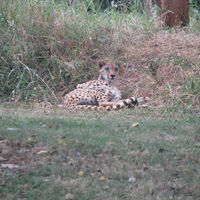 Nairobi National Park 4/13 by Tripoto