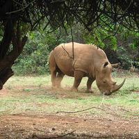 Nairobi National Park 5/13 by Tripoto
