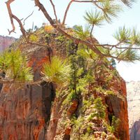 Zion National Park 4/7 by Tripoto