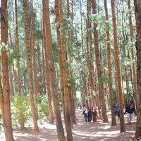 Pine Forest Shooting Spot 2/17 by Tripoto