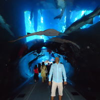 Dubai Aquarium & Underwater Zoo - Dubai - United Arab Emirates 5/9 by Tripoto