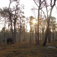Dubare Elephant Camp 4/4 by Tripoto