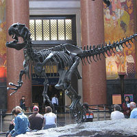 American Museum of Natural History 2/5 by Tripoto