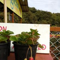 Bagicha Corner - Ice Cream Parlour & Juice Center 2/3 by Tripoto