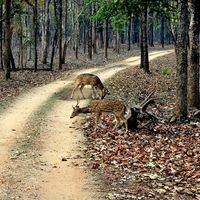Satpura National Park 5/10 by Tripoto