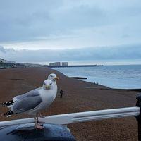 Brighton Pier 5/5 by Tripoto