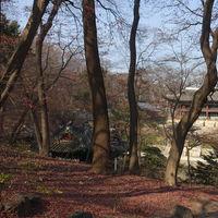 Changdeokgung Palace 2/4 by Tripoto