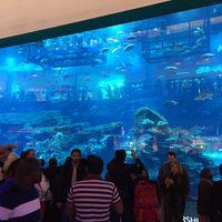 Kempinski Hotel Mall of the Emirates - Dubai - United Arab Emirates 4/8 by Tripoto