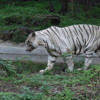 Rajiv Gandhi Zoological Park 3/5 by Tripoto