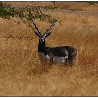 Blackbuck National Park 3/8 by Tripoto