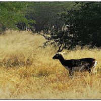 Blackbuck National Park 2/16 by Tripoto