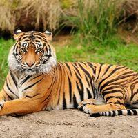 Tiger Kingdom 3/7 by Tripoto